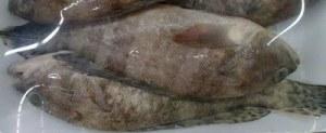 Errado: peixe de cores desbotadas, sem vida